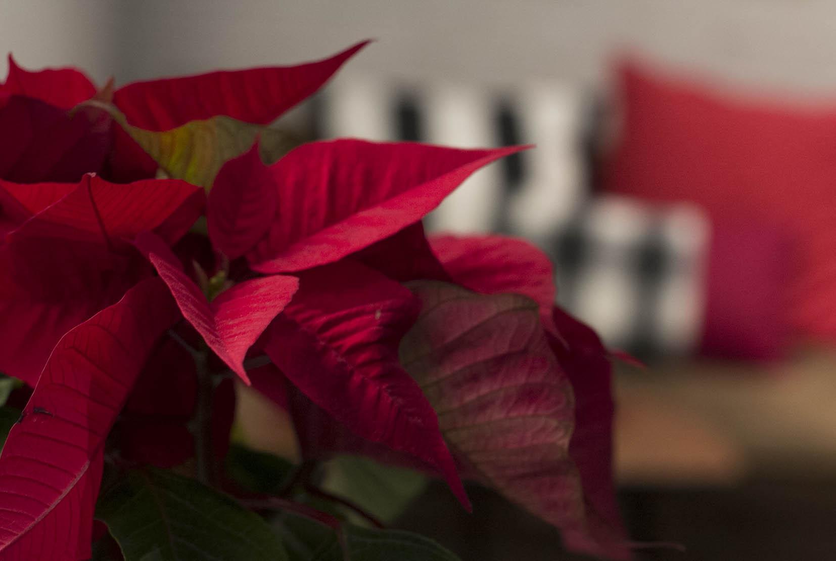 Navidad en Atrezzo Peluqueria Zaragoza